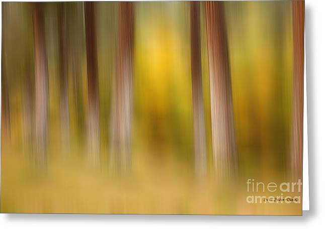 Green And Yellow Abstract Greeting Cards - Lost in Autumn Greeting Card by Reflective Moments  Photography and Digital Art Images