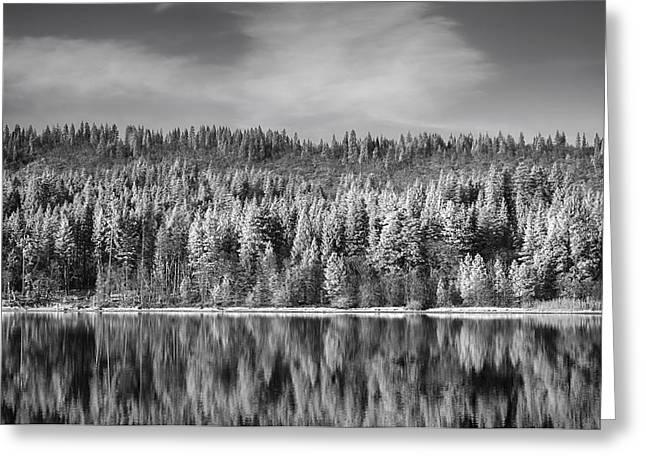 Infrared Greeting Cards - Lost in Reflection Greeting Card by Laurie Search