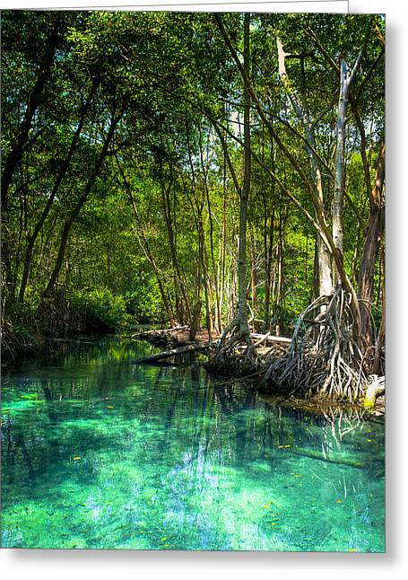 Mangrove Forests Greeting Cards - Lost Lagoon On The Yucatan Coast Greeting Card by Mark Tisdale