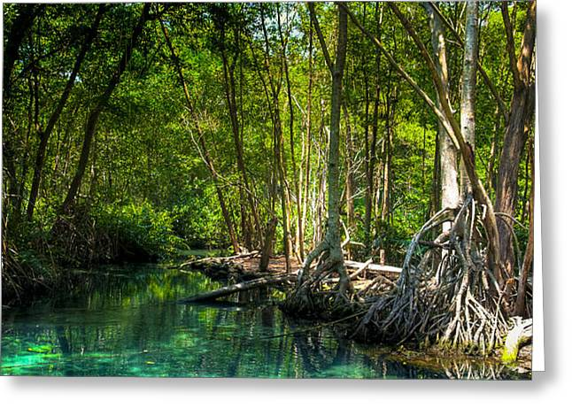 Lost Lagoon On The Yucatan Coast Greeting Card by Mark Tisdale