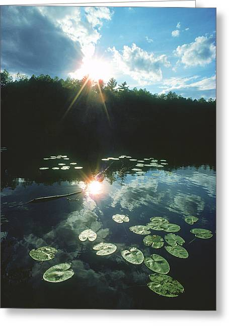 Water Lilies Greeting Cards - Lost Lake Lilies - Northwoods Wisconsin Greeting Card by Bruce Thompson