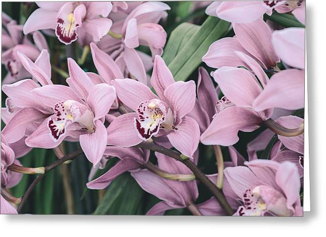 Floral Photographs Greeting Cards - Lots of orchids Greeting Card by Nastasia Cook