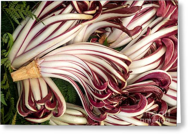 Nutriment Greeting Cards - Lots of radicchio heads  Greeting Card by Frank Bach