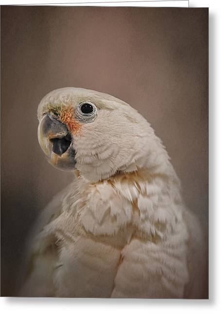 Cockatoo Greeting Cards - Lots to Say Greeting Card by Jai Johnson