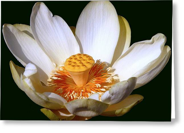 Lotus Full Bloom Greeting Cards - Lotus Blossom #2 Greeting Card by Jim Whalen