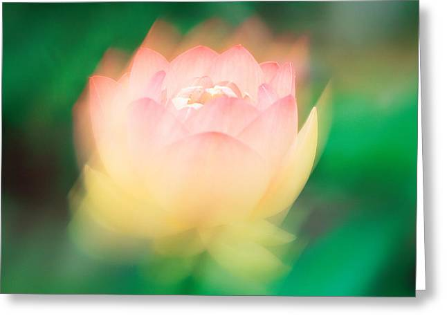 Selective Soft Focus Greeting Cards - Lotus, Blurred Motion Greeting Card by Panoramic Images