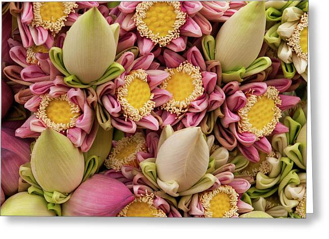 Indochine Greeting Cards - Lotus Buds 03 Greeting Card by Rick Piper Photography
