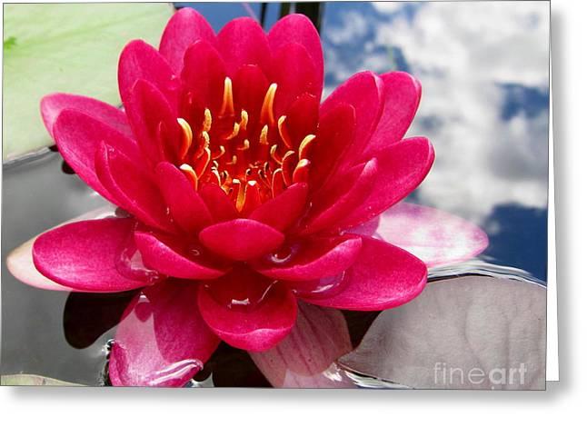 Graceful Lotus Greeting Cards - Lotus Cloud Greeting Card by Joshua Bales