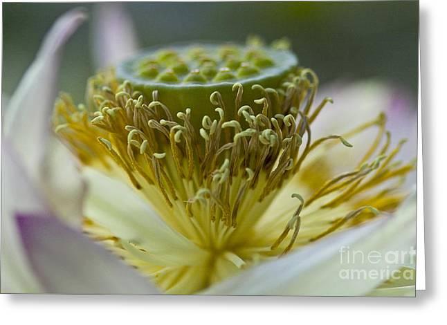 Lotus Detail Greeting Card by Heiko Koehrer-Wagner
