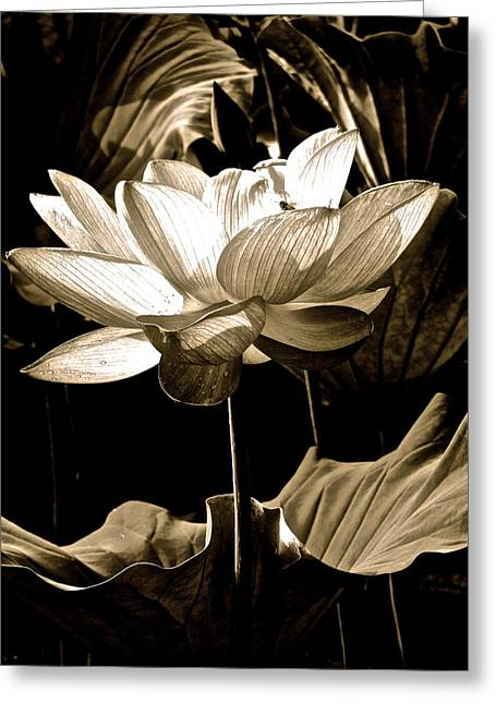 Lotus Full Bloom Greeting Cards - Lotus Fantasy Greeting Card by Larry Knipfing