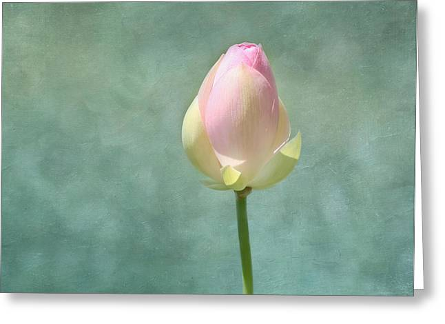 Pink Lotus Greeting Cards - Lotus Flower Bud Greeting Card by Kim Hojnacki