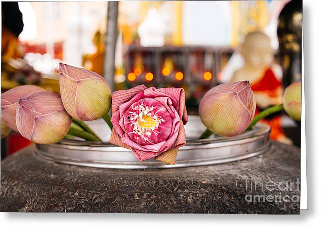 Pink Lotus Greeting Cards - Lotus Flower Offering Greeting Card by Dean Harte