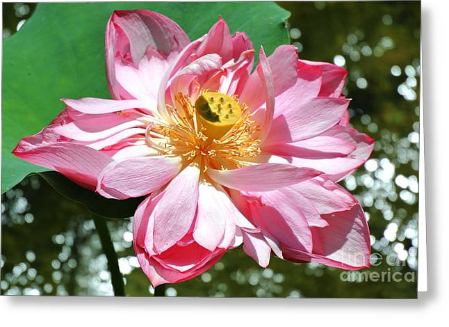 Lotus Flower Greeting Card by Sarah Christian