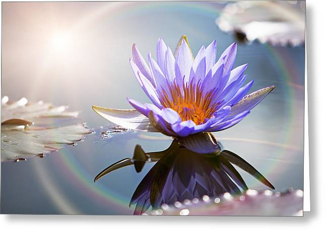 Lotus Leaves Greeting Cards - Lotus Flower With Sun Flare Greeting Card by Susan  Schmitz