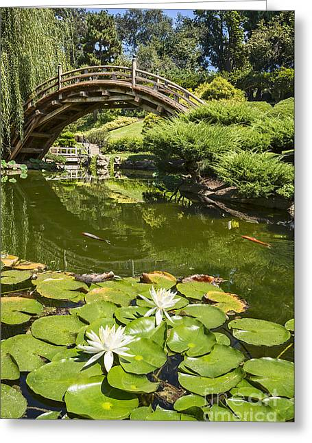 Willow Lake Greeting Cards - Lotus Garden - Japanese Garden at the Huntington Library. Greeting Card by Jamie Pham
