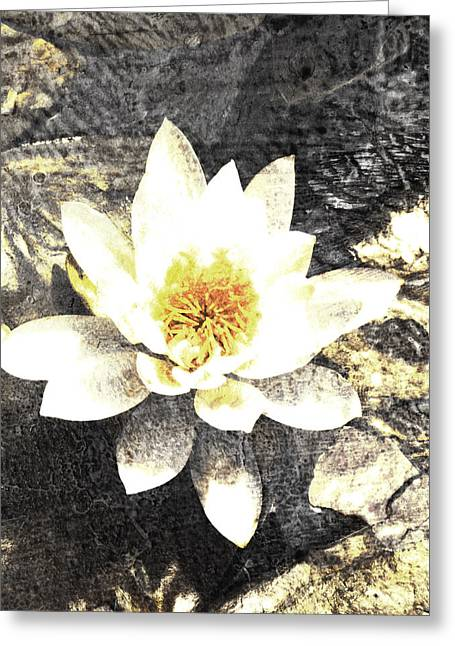 Water Lilly Digital Greeting Cards - Lotus Gray and Yellow Greeting Card by Ann Powell