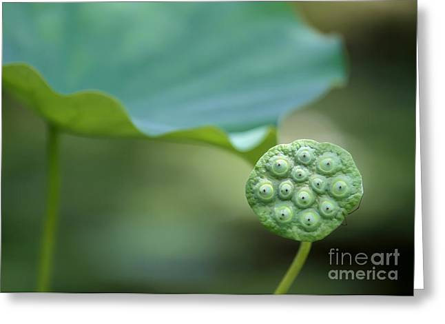 Landscap Greeting Cards - Lotus Leaf and a Seed Pod Greeting Card by Sabrina L Ryan