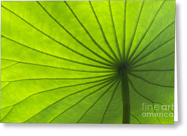 Lotus Leaves Greeting Cards - Lotus Leaf Greeting Card by Tim Gainey