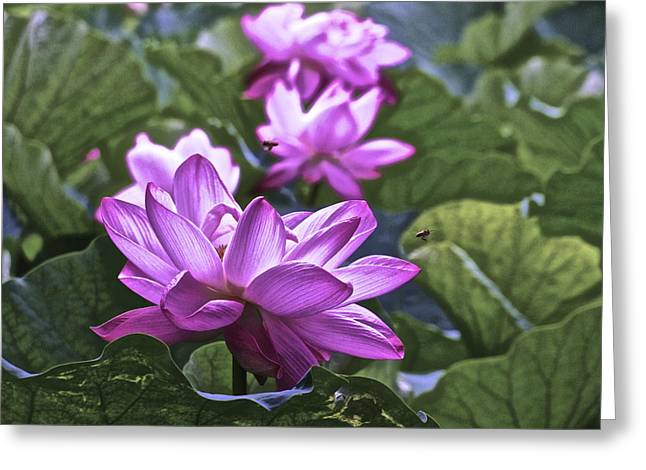 Lotus Full Bloom Greeting Cards - Lotus Life - 7 Greeting Card by Larry Knipfing