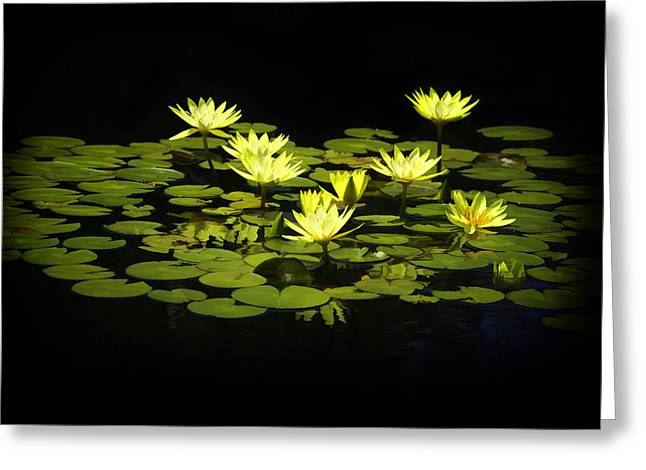 Lotus Lillies Greeting Card by Janet Fikar
