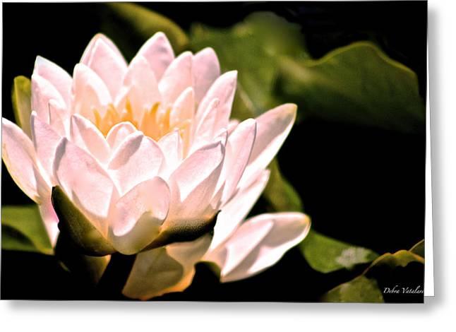 Blooms Greeting Cards - Lotus Love Shines Greeting Card by Debra     Vatalaro