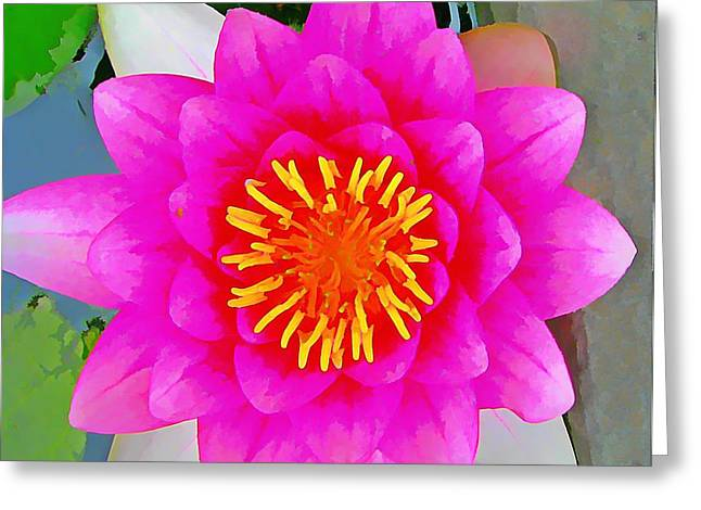 Hot Pink Custom Greeting Cards - Lotus Mirror Greeting Card by Anne Sterling