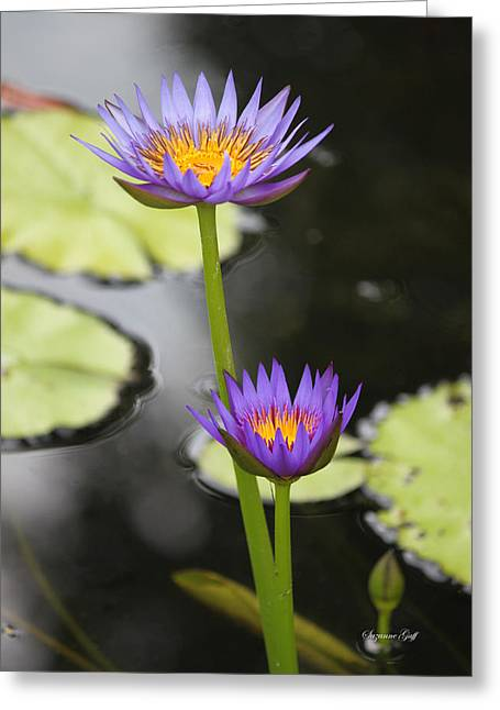 Lily Pad Greeting Cards Greeting Cards - Lotus Pair Greeting Card by Suzanne Gaff