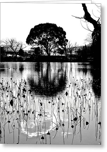 Lotus Full Bloom Greeting Cards - Lotus Pond - Winter 11 Greeting Card by Larry Knipfing