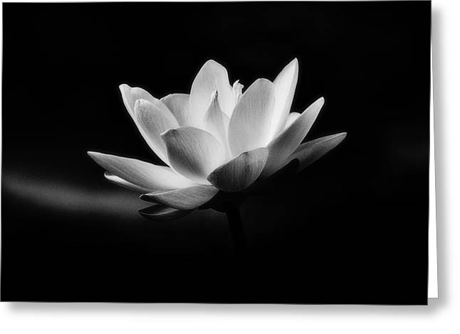 Lotus Greeting Card by Scott Pellegrin