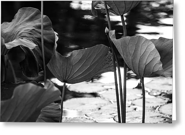 Lotuses in the Pond I. Black and White Greeting Card by Jenny Rainbow