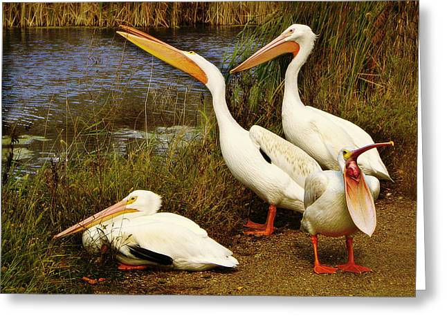 Pelican Greeting Cards - Loud Mouth Greeting Card by Nikolyn McDonald