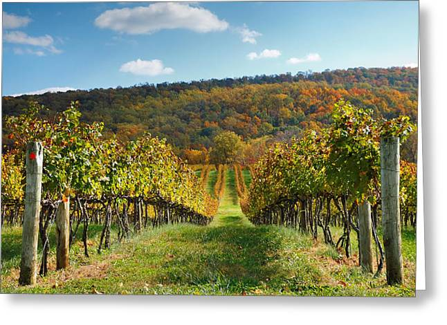 Vineyard Prints Greeting Cards - Loudon County Vineyard I Greeting Card by Steven Ainsworth