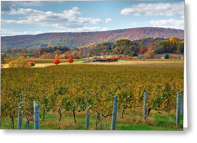 Vineyard Prints Greeting Cards - Loudon County Vineyard II Greeting Card by Steven Ainsworth
