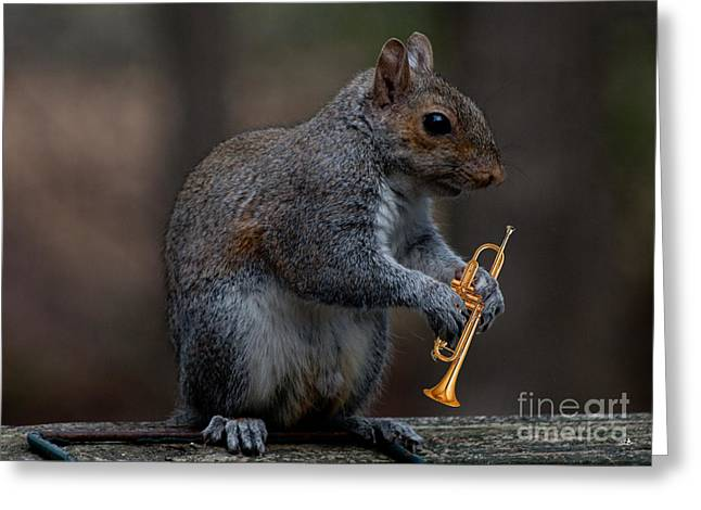 Playing Musical Instruments Greeting Cards - Louis the Squirrel Greeting Card by Sandra Clark
