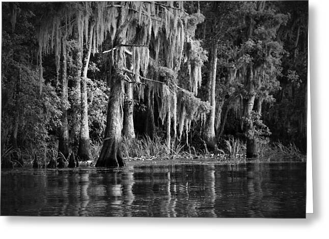 Louisiana Bayou Greeting Card by Mountain Dreams