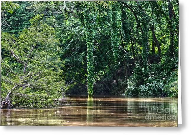 Tannic Acid Greeting Cards - Louisiana Bayou Toro Creek Swamp Greeting Card by D Wallace