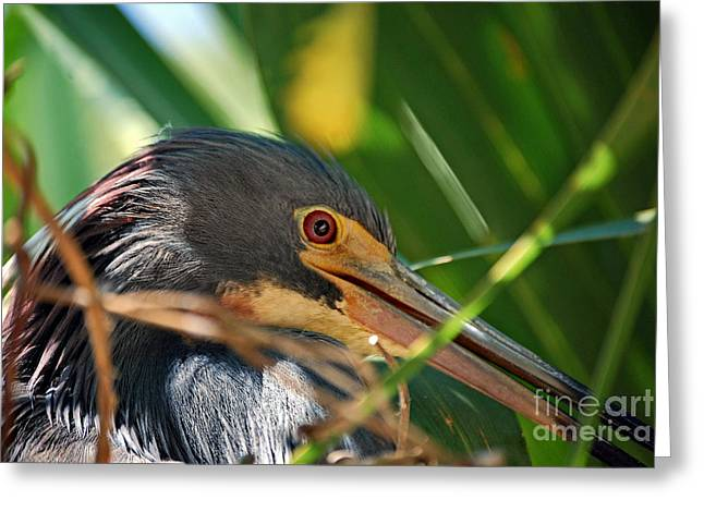 Photos Of Birds Greeting Cards - Louisiana Eye Greeting Card by Skip Willits