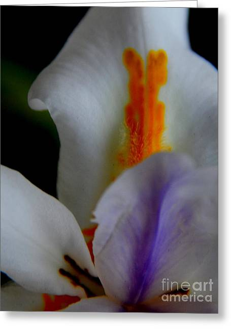 New Orleans Louisiana Plant Framed Prints Greeting Cards - Louisiana Iris Greeting Card by Michael Hoard