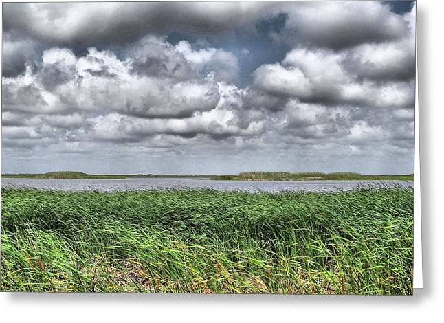 Swampland Greeting Cards - Louisiana Swampland Greeting Card by Dan Sproul