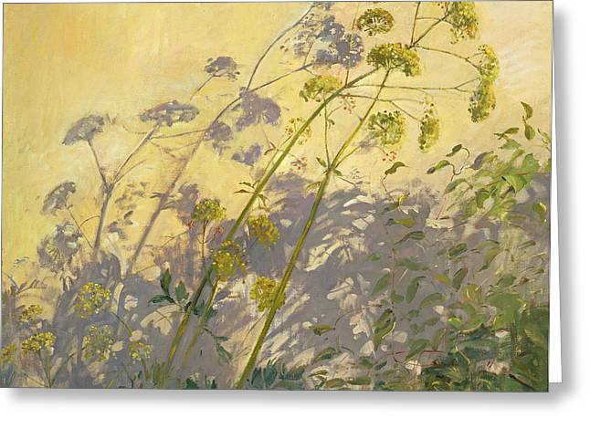 Against The Sunlight Greeting Cards - Lovage Clematis and Shadows Greeting Card by Timothy  Easton