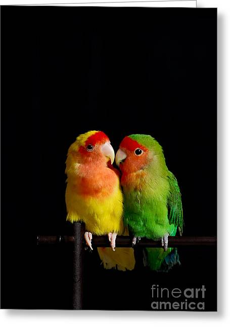 Rating Greeting Cards - Love Birds At First Sight Greeting Card by Syed Aqueel