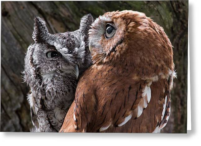 Wildcats Greeting Cards - Love Birds Greeting Card by Dale Kincaid