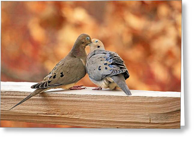 Mourning Dove Greeting Cards - Love Birds Greeting Card by Donna Kennedy