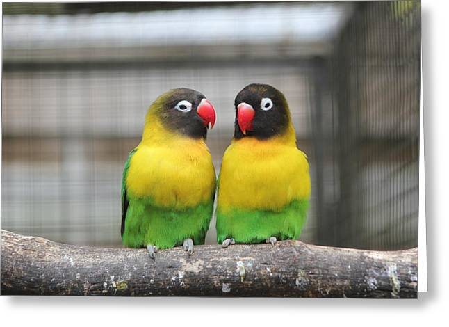Kerry Lapcevich Greeting Cards - Love Birds Greeting Card by Kerry Lapcevich