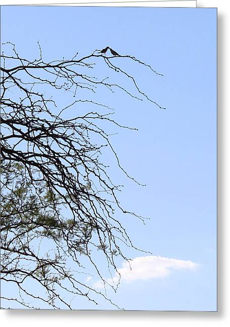 Love The Animal Greeting Cards - Love Birds Greeting Card by Kume Bryant