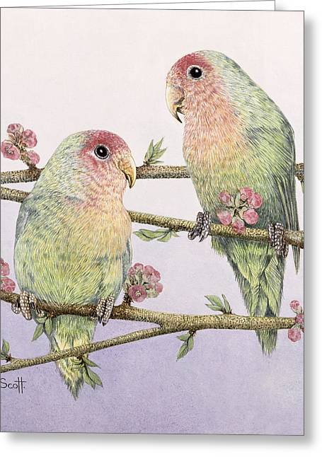 Blossoming Greeting Cards - Love Birds Greeting Card by Pat Scott