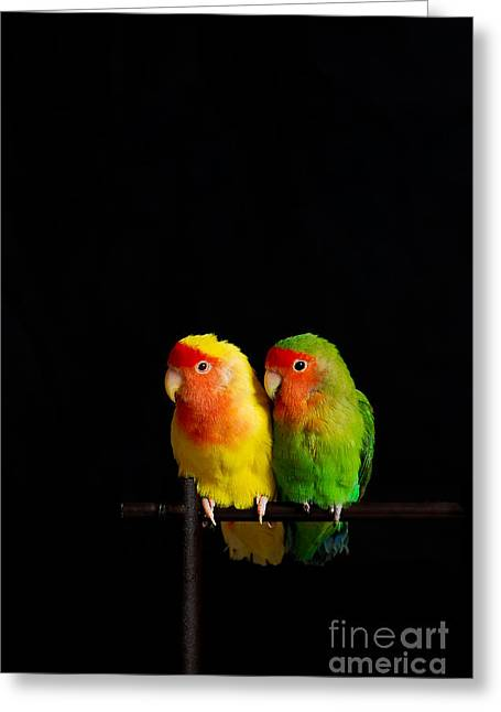 Rating Greeting Cards - Love Birds Greeting Card by Syed Aqueel