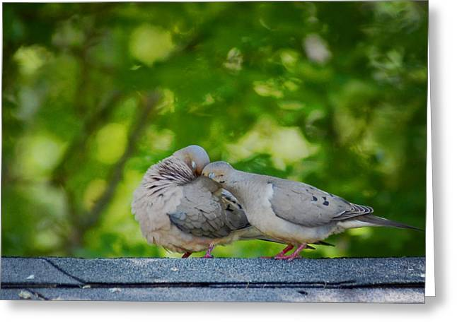 Love Doves  Greeting Card by Terry DeLuco