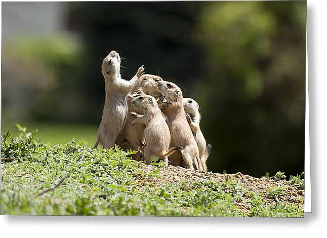 Yip Greeting Cards - Love Huddle Greeting Card by Sandy Nervig