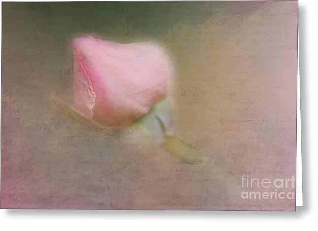 A New Focus Photography Greeting Cards - Love in Bloom  Greeting Card by A New Focus Photography